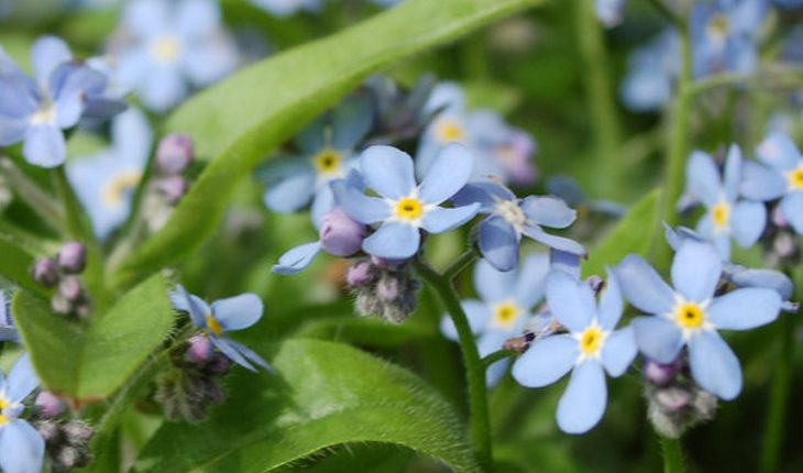 Blühender Pflanzengarten