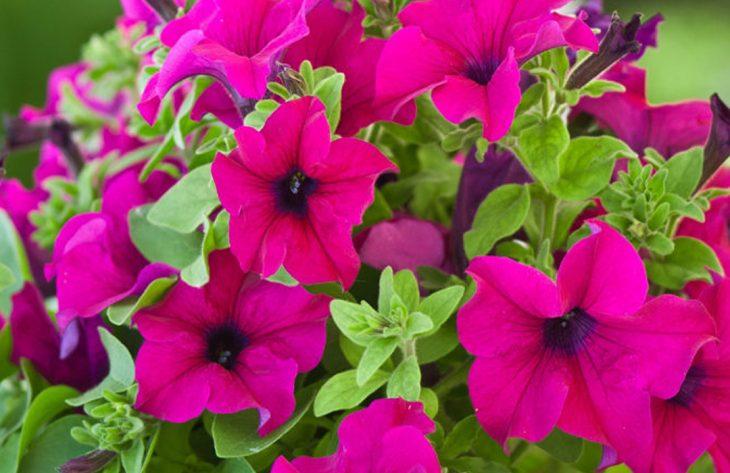 Blumenerde