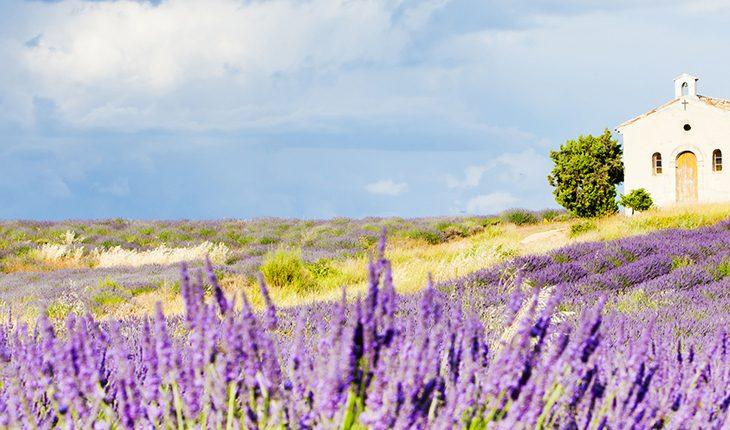 Mediterrane Pflanzen